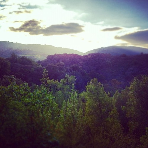 Rolling Golden Hills | #beautiful #california #hills #sunset #igers #iphoneography #instagramhub  (Taken with Instagram at Santa Cruz Mountains)