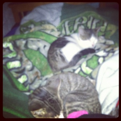 My baby Yusuke and Pickles are sleeping on me  (Taken with Instagram)
