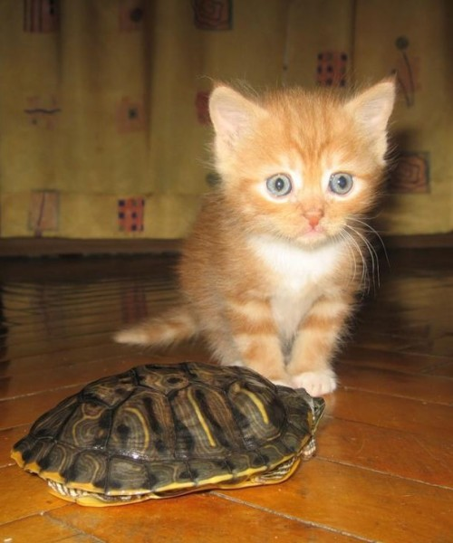 Mommy!!! The turtle bit me!