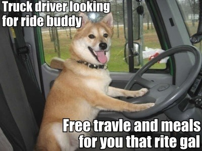 If you need a ride buddy why don't you just get a   … dog  … oh.
