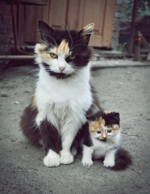 reves-et-cauchemars:  Mom and daughter. <3