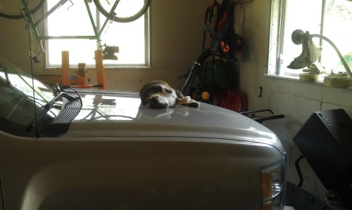 get off of there cat. you are not built ford tough.