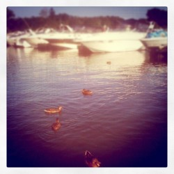 #ducks #harbor #Chicago #boats #chicagoharbor #igchicago  (Taken with Instagram)