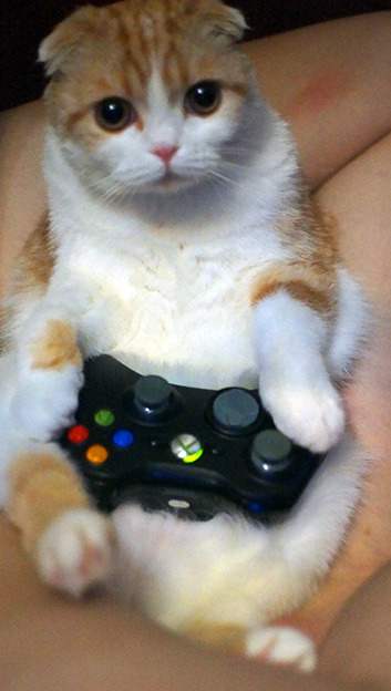 waffles-the-cat:  I don't have thumbs but I'm really good at video games!