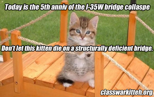 Today is the 5th anniversary of the I-35W bridge collapse. Don't let this kitten die on a structurally deficient bridge.