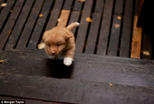 theanimalblog:  World's Cutest Puppy?