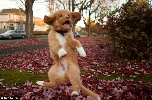 World's Cutest Puppy?  Fuzzy Animal Friday!! This is defintely not the world's cutest puppy, as that award has been given to Annie, but Denver is pretty durn cute.
