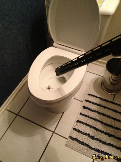 Giant Spider in the Toilet Threatened with Gun Over-reaction or under-reaction?