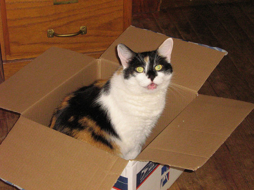 Cat In The Box by CatwomanofV (AKA The Blind Photographer) on Flickr.