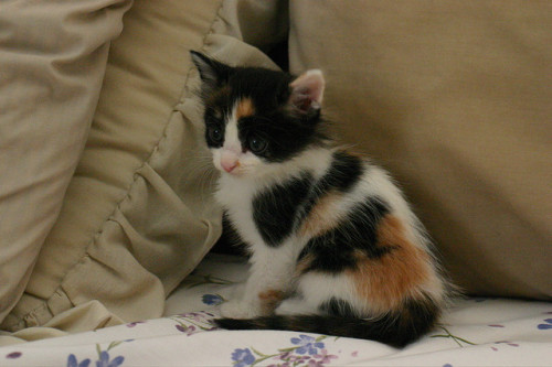 Our new kitten by Kelli on Flickr.