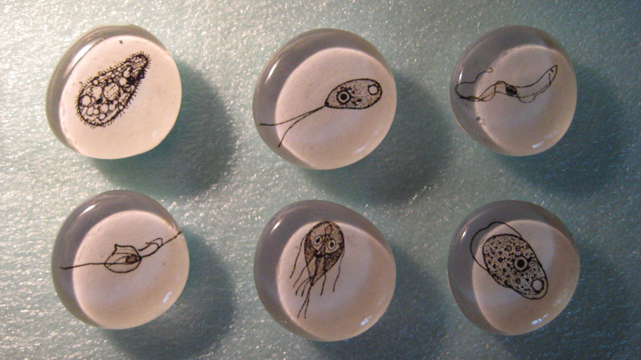 Cell Biology: Leeuwenhoek magnets