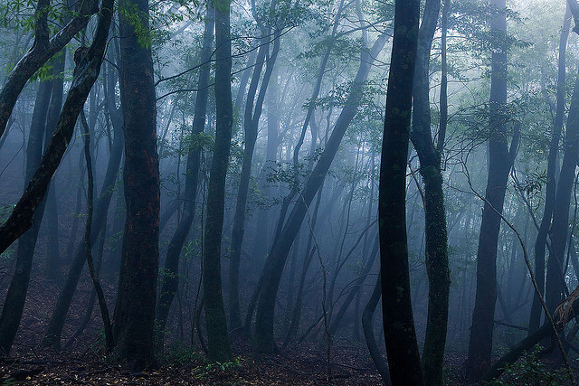 Kusugawa trail, Yakushima Island by caseyyee on Flickr.