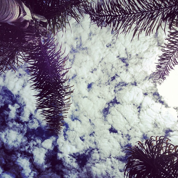 Cali skies #lbc #socal #clouds #trees #meditation #appreciating #instagood (Taken with Instagram at Long Beach Shoreline Marina)