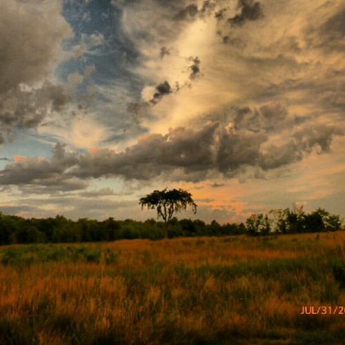 Yesterday. #sky #clouds #tree #forest #field #grass (Taken with Instagram)