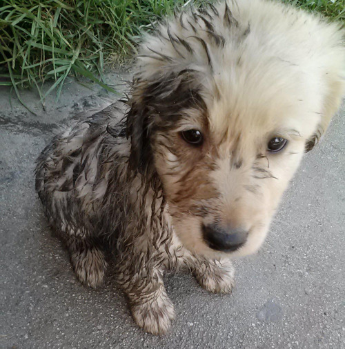 "Puppy's Mud Romp Under Investigation A puppy named Buster is under investigation by local authorities after muddy paw prints were discovered on the living room carpet. ""I ain't sayin' it was him,"" sheriff Willy Camden tells The Fluffington Post. ""But I don't see any other muddy puppies around here, do you?"" Via unluckylover0."