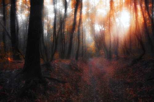 mykindafairytalee:  october sunshine by *ildiko-neer