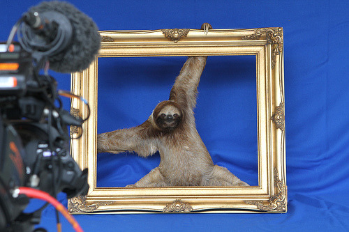 what a sassy sloth