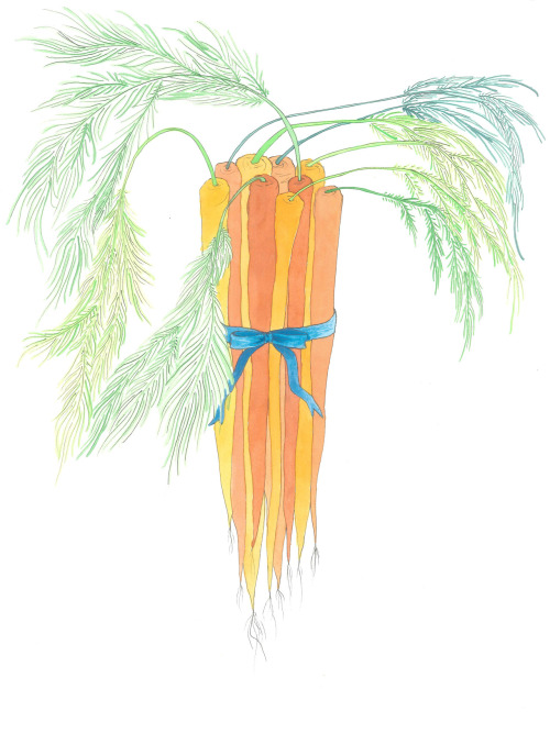 "May 26, 2012 (Carrots)15""x11""ink and watercolor on paper Buy Carrotson Etsy"