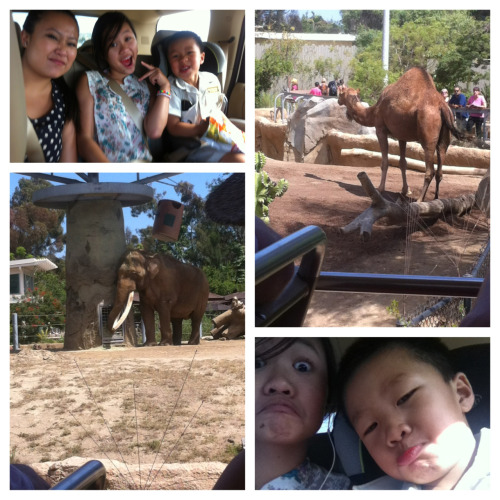 Went to the San Diego Zoo today with the fam:))