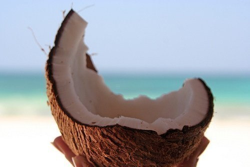 light-sun:  vlva-la-vlda:  coconut :]  indie blog that follows back☯