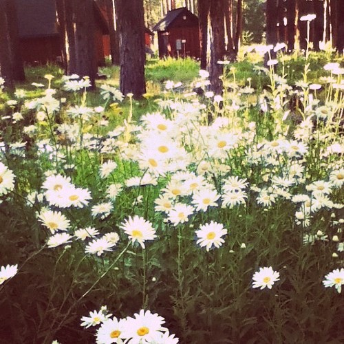 Flowers (Taken with Instagram)
