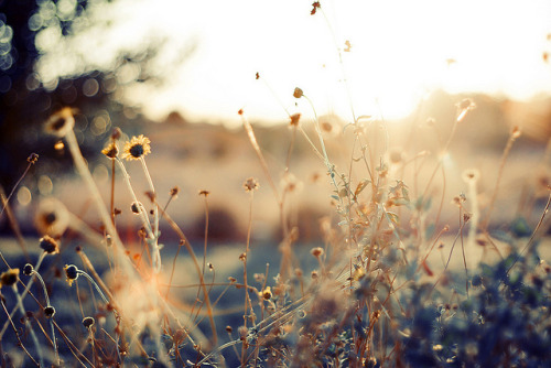 fragile-whispers:  (via Untitled | Flickr - Photo Sharing!)