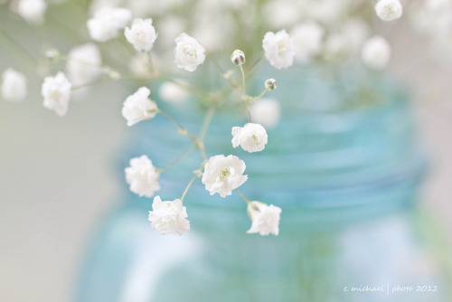 112 in 2012 58. Delicate by cmichael1 on Flickr.