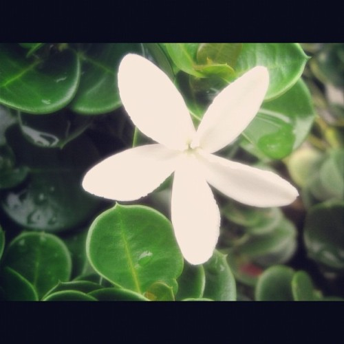 Love nature #flower #plant #green #nature  (Taken with Instagram)