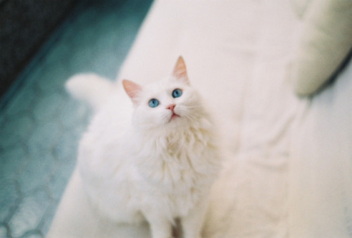 000039 by Mathilda* on Flickr.
