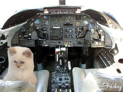 "Choupette Flies In The Cockpit, Loves ""Looking At The Sky"""