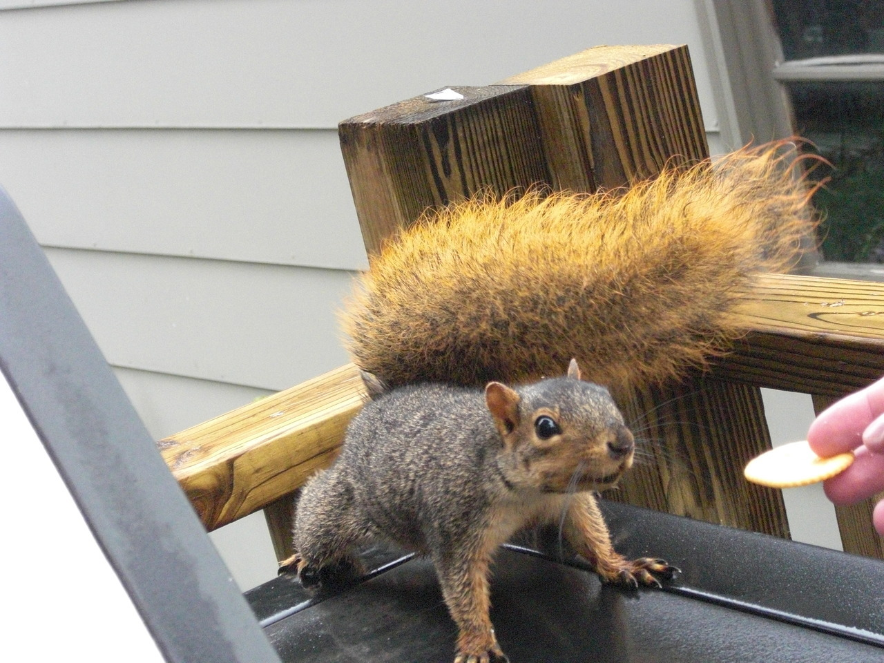 We feed this squirrel.
