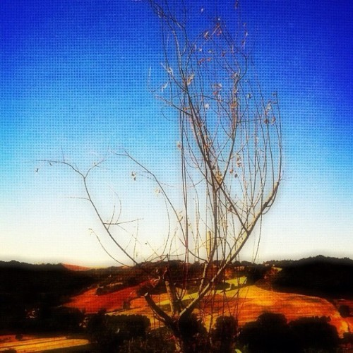 Autumn approaching to Tuscany. #italy #tuscany #ladolcevita #tree #branches #landscape #dreamy #iphoneonly #orange #red #summer #blue #sky #countryside #beauty #warm #hills #patches #vacations  (Taken with Instagram)
