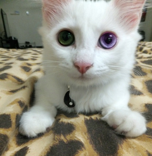 pastel—penis:  beautiful cat is beautiful