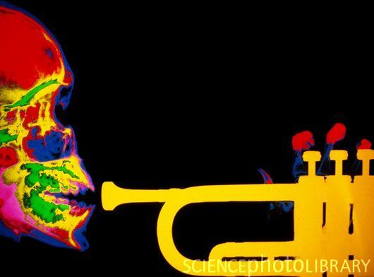 This is a skull trumpet dying while having an MRI scan. Before you die, your brain releases tons and tons of endorphins that make you feel a range of emotions. Tragically beautiful. Doot doot.