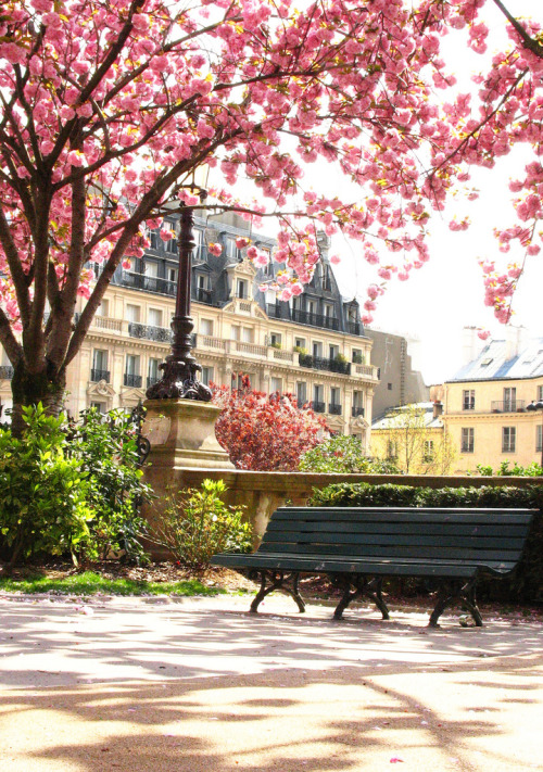 cornersoftheworld:  Blossoms in the park, Paris (by carrie mck)