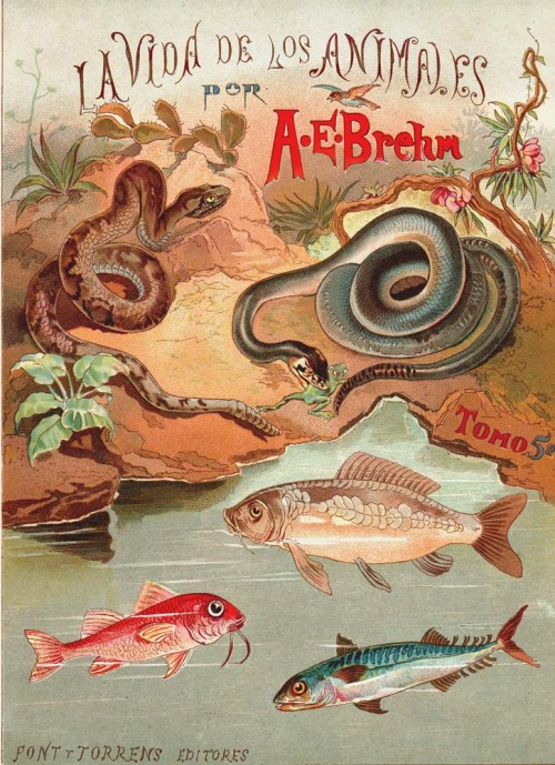 "aycarambas:  Fontispiece of of Alfred Brehm's ""Life of Animals""  (Brehms Tierleben) . From a `1883  Spanish edition, volume 5 (reptiles, amphibians and fishes)."