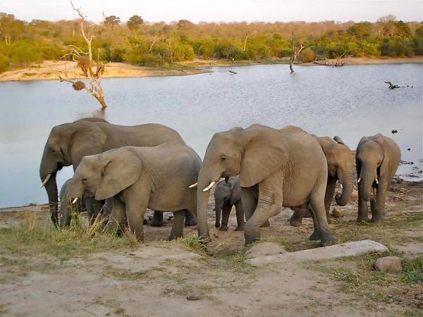 rhamphotheca:  A family of African Plains Elephants (Loxodonta africana) visits a water hole in Kruger National Park, South Africa. (photo: Linda and Dr. Dick Buscher) (via: Our Amazing Planet)