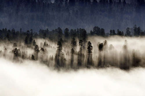 Trees in Mist by Coconino National Forest on Flickr.Beautiful morning shot of trees casting shadows on the mist as the morning sun rises near East Clear Creek. Taken on 8-1-12 by Brady Smith. Credit: U.S. Forest Service, Coconino National Forest.