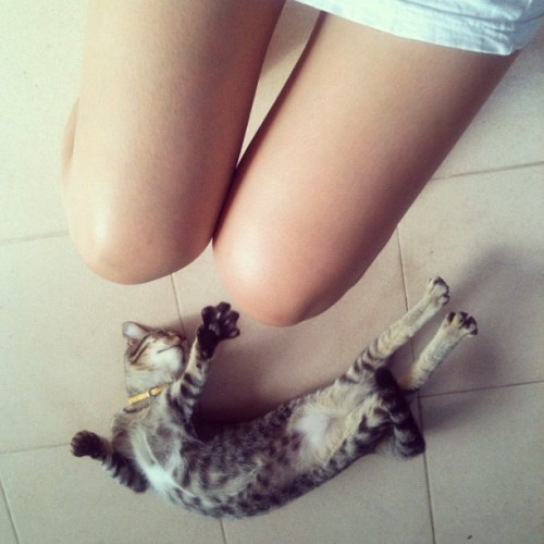 ยืดตัว..ทำมอง🐱 #Phuket #thai #thailand #cat #kitten #see #look #under #morning (Taken with Instagram at Sinsae Kimsia Saejung (House)@Phuket Villa Downrung)