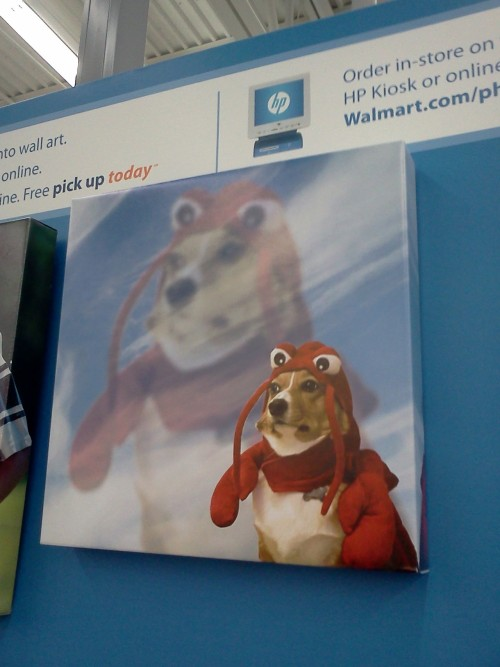 burrenbari:  youdumbdominick:  I saw this at Walmart today.   THAT IS MY FAVORITE PICTURE