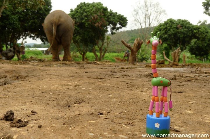"Baan Chang Elephant Park Part 2: How To Train An Elephant (Or Try At Least) After an awesome first day at Baan Chang, it was time for the ""main event""!Time to train, trek and bathe with the elephaaaaants!! Gaaahh! Now, I was wary about joining just any mahout training course because the last thing I wanted to do was help fund the inhumane treatment of elephants (similar to Mali's case). So, I tried to research as much as I could online, and I also wanted to talk to the Baan Chang tour coordinator in person to express my concern for the elephants' well-being, and well, my power as a blogger (albeit not a super popular one, but still) to expose malicious acts to my readers. But you'll never really know what they will be like until you get there. [[MORE]] [With Dag, Michelle, Amy and Joe, waiting to be briefed in our not-so-fabulous mahout outfits]  [Feeding sugar cane to an elephant…yup, my hand's in there somewhere. And they eat anywhere between 200-350 kilograms of food. Whut.]  The Use of Hooks / Weapons at Elephant Camps / Parks After giving the elephants a morning snack, our head mahout Woody briefed us on proper elephant etiquette, and apologized in advance for the possibility of him using his hook on an elephant. [Woody up front, with his hook, and other mahouts and their elephants in the background]  Woody explained that sometimes, some elephants do bad / naughty things to each other or to people, and the hook was used to discipline them. Sometimes, just showing them the hook would be enough to calm them down, and elephants have 3-inch thick skin, so it would have to take considerable force to hurt them. I had also spoken to Tinar, the Baan Chang booking agent, about this, and she explained that sometimes, the use of the hook was necessary, and she felt better because Baan Chang was at least transparent about it, unlike other elephant camps who show the pretense of not using weapons on the elephants but concealing nails in their hands. :( I am happy to report, however, that I did not see the mahouts use their hooks on their elephants, and I could feel that they really loved the elephant under their care. [Elephant munching on bananas with his mahout resting on his back]  My Brief ""Mahout"" Stint After being oriented, it was time! First, Woody taught us how to ride an elephant with the appropriate commands. I'm not sure I did it right though, but I think the elephant got it after a few times, and with the help of its mahout. :P [Practicing alighting and disembarking from Tong-en :P]  [Trekking with Mae Hong something - I couldn't quite catch what the mahout said the elephant's name was. I shared an elephant with Jessica of England. You have to pay for 2 people if you want an elephant to yourself. :P]   After an all too brief trek (around 45 minutes - but it's okay, we don't want to overwork the elephants), it was time to bathe the elephants! While I was looking forward to this fun activity, I was a bit worried about wading in a pond filled with elephant pee and floating chunks of poo. But it wasn't nearly as foul-smelling as I thought it would be. Just be careful not to get the water in your eyes. :P    [Some humping action going on! Exhibitionist elephants :P]  [With our elephant's mahout]  It was an awesome 2 days, and I would definitely do this again. :)View more pictures here. Gotta rush off now! Heading for Laos,Jen Follow my tweets • Find me on Facebook • Sign up for my newsletter • E-mail me  Baan Chang Elephant Parkwww.baanchangelephantpark.com147/1 Rachadamnoen RoadMuang, Chiang Mai, Thailand+66 53 814174 / +66 89 6355206info@baanchangelephantpark.com - They reply efficiently!"