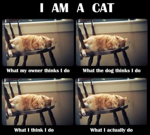 LOL, lazy cat is so lazy!