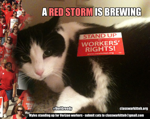 This kitteh's ready to stand in solidarity with IBEW and CWA members at Verizon who's bargaining may soon come to an end - are you?