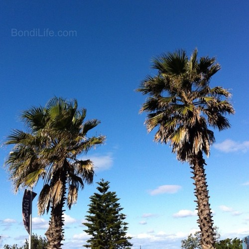 Twin palms #bondi #beach #bondibeach (Taken with Instagram at Hotel Bondi) Visit Bondi Life on Facebook | The Bondi Life Blog | Twitter | Google+ | Instagram | Pinterest