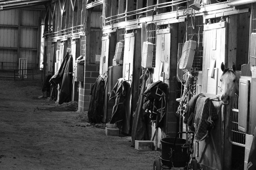 The tack room (by Rick@Bristol)