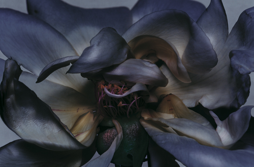 Nick Knight - From the series 'Rose', 2000.