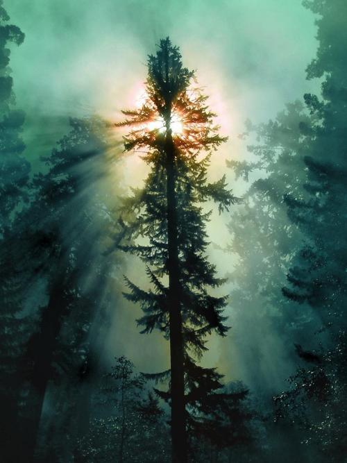 Redwood National Park, California. by Beatrix M. Varga :)