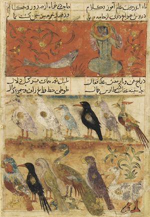 Folio from a Mu'nis al-Abrar fi Deqa'iq al-Ash'ar; top: The Moon and Fish; bottom: Twelve different birds in 2 registers (via Arts of the Islamic World | Folio from a Mu'nis al-Abrar fi Deqa'iq al-Ash'ar; top: The Moon and Fish; bottom: Twelve different birds in 2 registers | F1946.14)