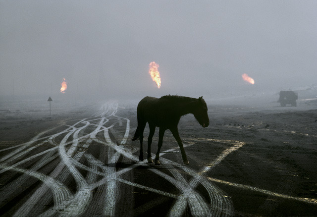 Steve McCurry, Horse and tire tracks, Kuwait, 1991