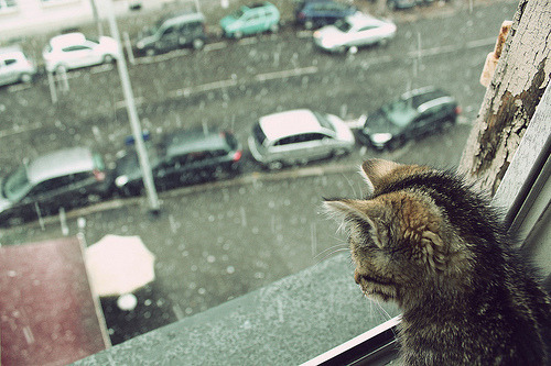 catslookingoutthewindowattherain:  (via Apartment | Cat | Kitten | Photography | Rain | Window - PicShip on we heart it / visual bookmark #17203873)